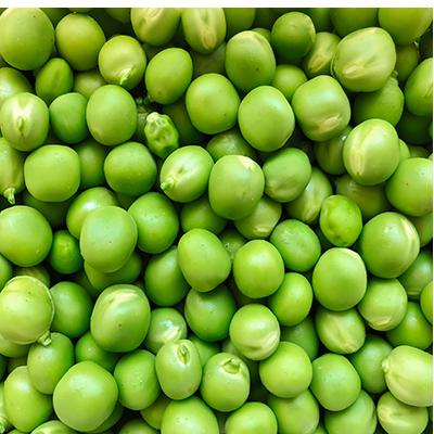 proteine del pisello
